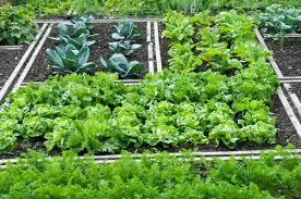 Molta produzione in pochissimo spazio: è la regola nell'agricoltura moderna