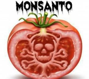 Monsanto pomodoro mortale