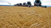 """Le spighe di ogni genere di cereali (qui ovviamente il buon caro grano) tornano """"prepotentemente"""" di scena a tavola..."""
