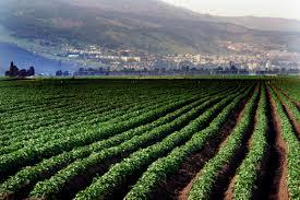 La redditività per ettaro è cresciuta e crescerà ancora, supportata dalla serricoltura (anche su più livello sullo stesso spazio).