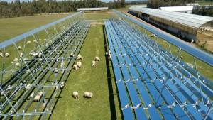 Un moderno allevamento di ovini. Ricordate le dolci pecorelle di Giotto e i pastori di D'Annunzio ai primi del 900 che con la transumanza non vedevano casa per mesi?