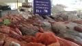Pescato mazarese durante il Blue sea land
