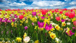 Un campo fiorito in Europa  dove si moltiplicano parchi e riserve naturali, una trentina solo in Sicilia...