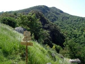 La Riserva Naturale di Bosco della Favara e Bosco Granza si estende in provincia di Palermo nei comuni di Aliminusa, Cerda, Sclafani Bagni e Montemaggiore Belsito.