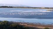 Stagni di Vendicari uccelli di passa.
