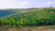 """I vigneti in Sicilia si estendono a perdita d'occhio, ma a volte da piccoli """"cultivar"""" nascono differenze e risultati sorprendenti.  Decisive la qualità della terra e l'esposizione."""