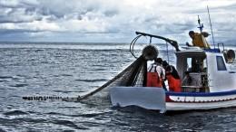 Piccola pesca presa di mira dall'UE: saranno questi pescatori a distruggere il pesce in Mediterraneo?