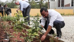 Etiopia: alberi ovunque. Per piantarli dovevano provenire da un vivaio.  Fondamentali , dunque, le attuali tecniche di coltivazione.