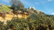 Uno scorcio del Giardino della Colimbetra nella valle dei Templi di Agrigento. Veri e propri angoli di paradiso caratterizzano la soleggiata e ventilata Sicilia.