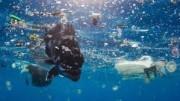 Un abitante un po' misterioso nuota nell'azzurro, ma fra i rifiuti. Non tutto il mare è così, ovviamente. Ma le correnti radunano a volte plastica e materiali dispersi in mare dalle navi e da grandi comunità (esempio ristornati sul mare). Questi ritengono il mare infinito, ma non lo è. Finora ha risposto sopravvivendo e conservandola vita. Ma occorre dare un taglio all'inciviltà e all'incoscienza di chi l'inquina. Ad esempio alcune grandi industrie chimiche...