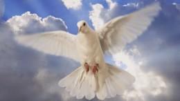 Lo Spirito Santo è rappresentato di frequente come una colomba bianca, simbolo di pace. Ma è anche sapienza e gioia. Lo Spirito Santo è Dio nella Santissima Trinità. Diciamo'simbolo di pace' per ricordare che queste rappresentazioni sono sempre un simbolo. Esse esprimono poeticamente l'idea di qualcosa che non si può rappresentare 'al vero'. Le immagini, una regola nella religione cristiana, aiutano la preghiera, ma non sono che mere immagini. L'oggetto del culto è ciò che esse rappresentano e che non cade sotto i nostri sensi. Anche questo articolo, senza immagini, perderebbe qualcosa...