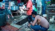 Il wetmarketi è un mercato stradale inconcepibile per le norme igieniche del 'mondo civile'.  Vi sono in vendita animali morti e vivi, fra cui cani e serpenti. I frigoriferi non sono stati ancora 'inventati', a quanto pare...