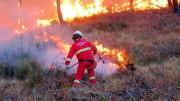 I vigili del fuoco stupiscono per la loro maestria, ma di fronte ad un intero bosco in fiamme è difficile dire che cosa si possa salvare.